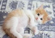 動物取扱登録業のことなら、東京都墨田区の米井行政書士事務所におまかせ下さい。